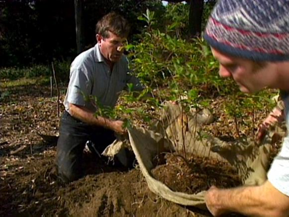 lift plant into hole using burlap