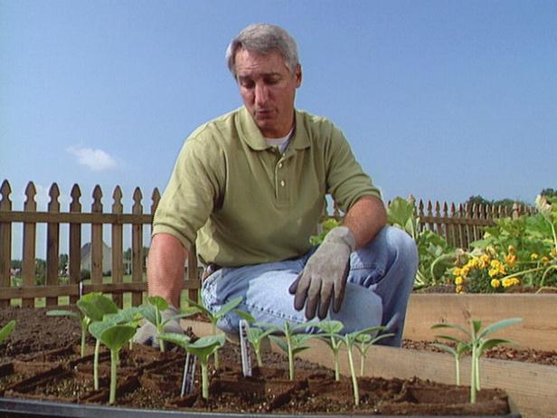 Transplant Squash Seedlings