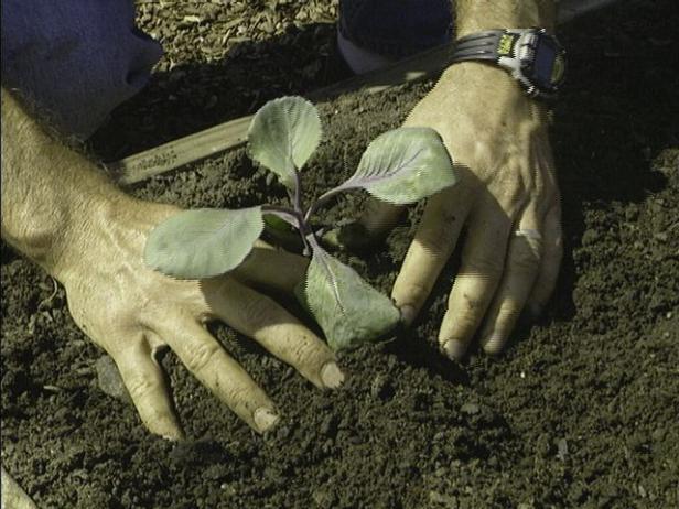 be careful not to break tender roots of seedlings