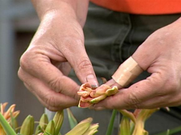 daylilies are easy to grow and are also edible