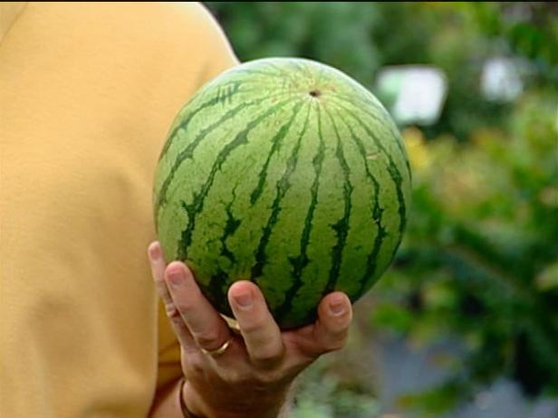 icebox watermelon has round shape with dark rind