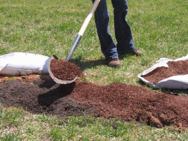 Prepare Soil for Blackberry Plants