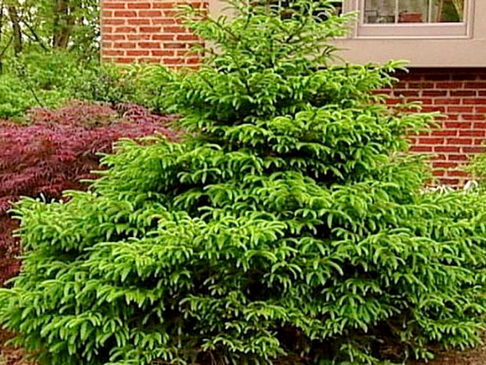 17 low maintenance plants and dwarf shrubs diy for Low maintenance colourful plants