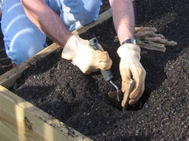 Planting Your Horseradish Seeds