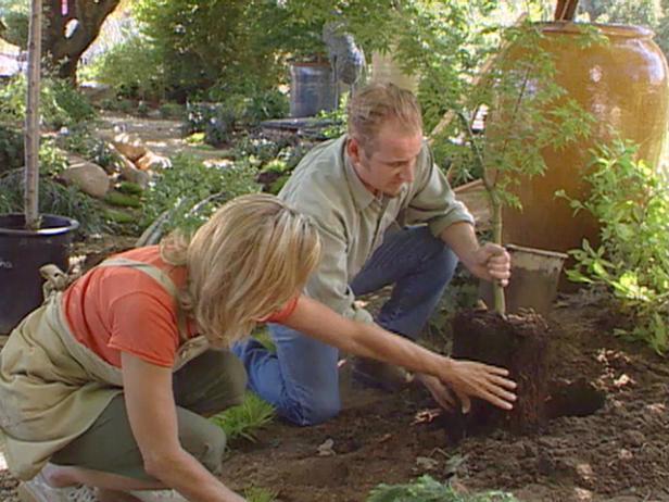 plant tree properly