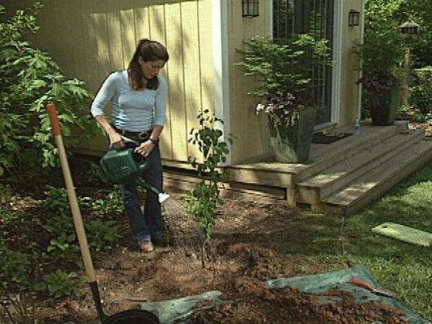 Water the tree well, and top it off with some extra soil to fill in where it settles after watering.