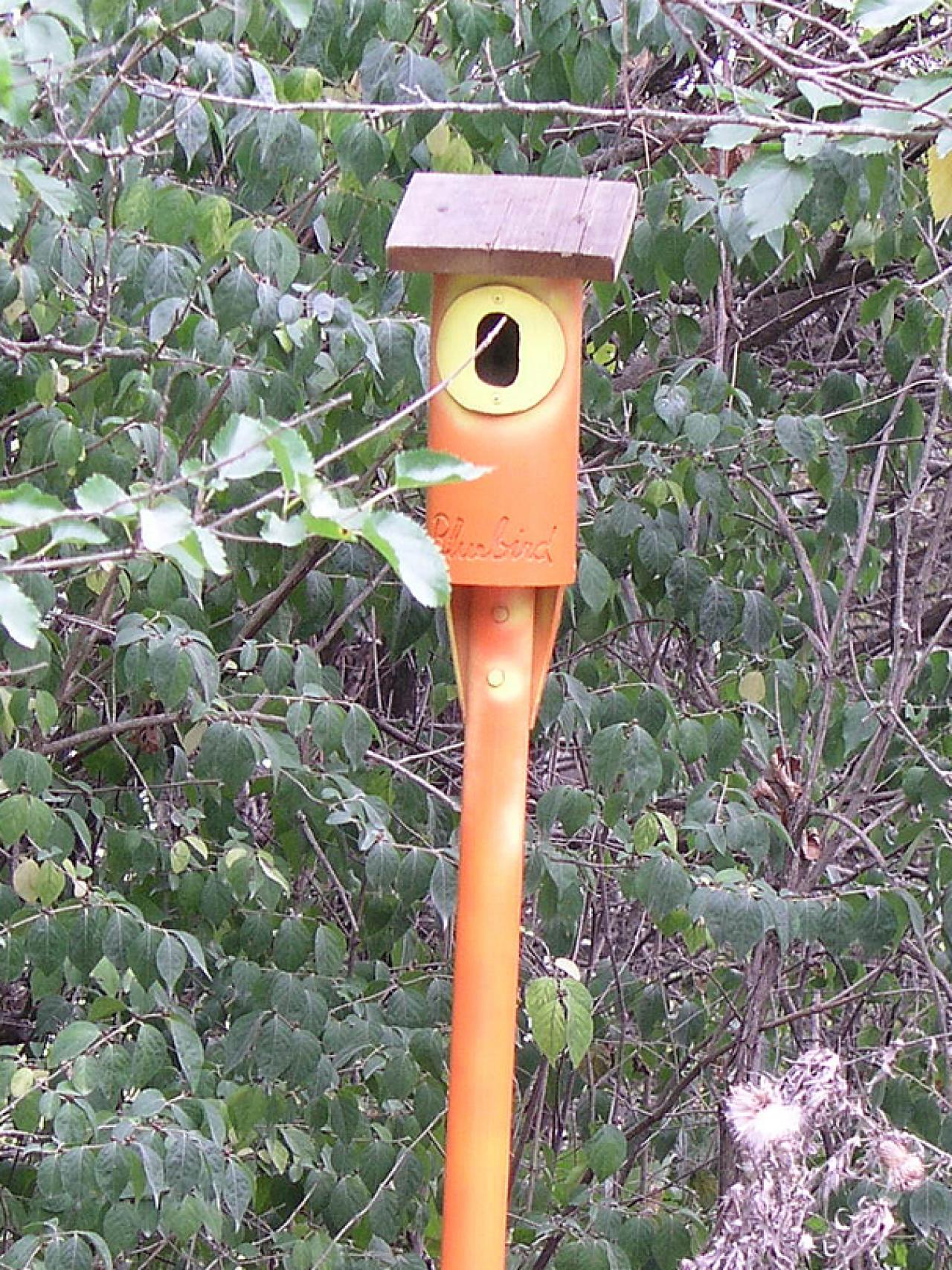 Diy Birdhouse How To Build A Birdhouse With Pvc Pipe Diy