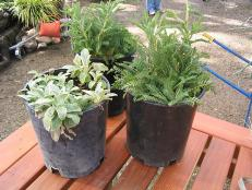 dividing plants saves money and extends plant life