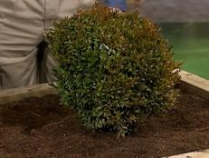 DIG120_planted-shrub_s4x3