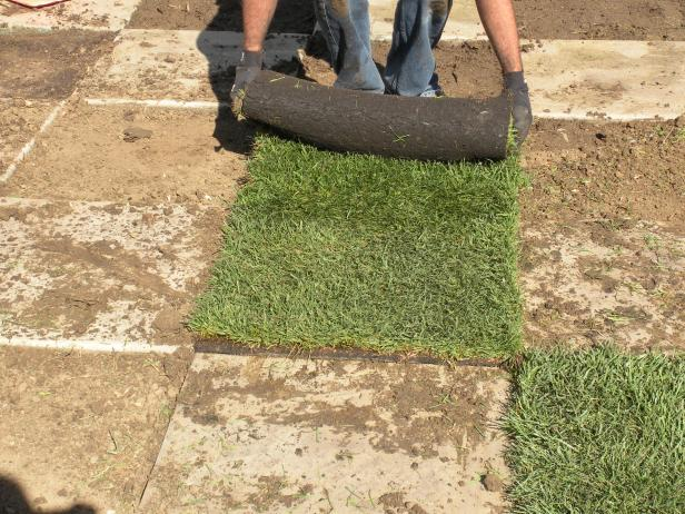 To keep the maintenance low on the patio, install a double-dwarf fescue sod. This variety grows slower than others so it doesn't need to be mowed as frequently. To install, fill the open boxes halfway up with soil and unroll the sod right on top.