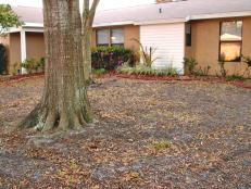PKL-amd_ww1-tree-roots-yard-Arlene-Nappi_s4x3