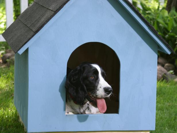 afters 14 blue dog house closeup