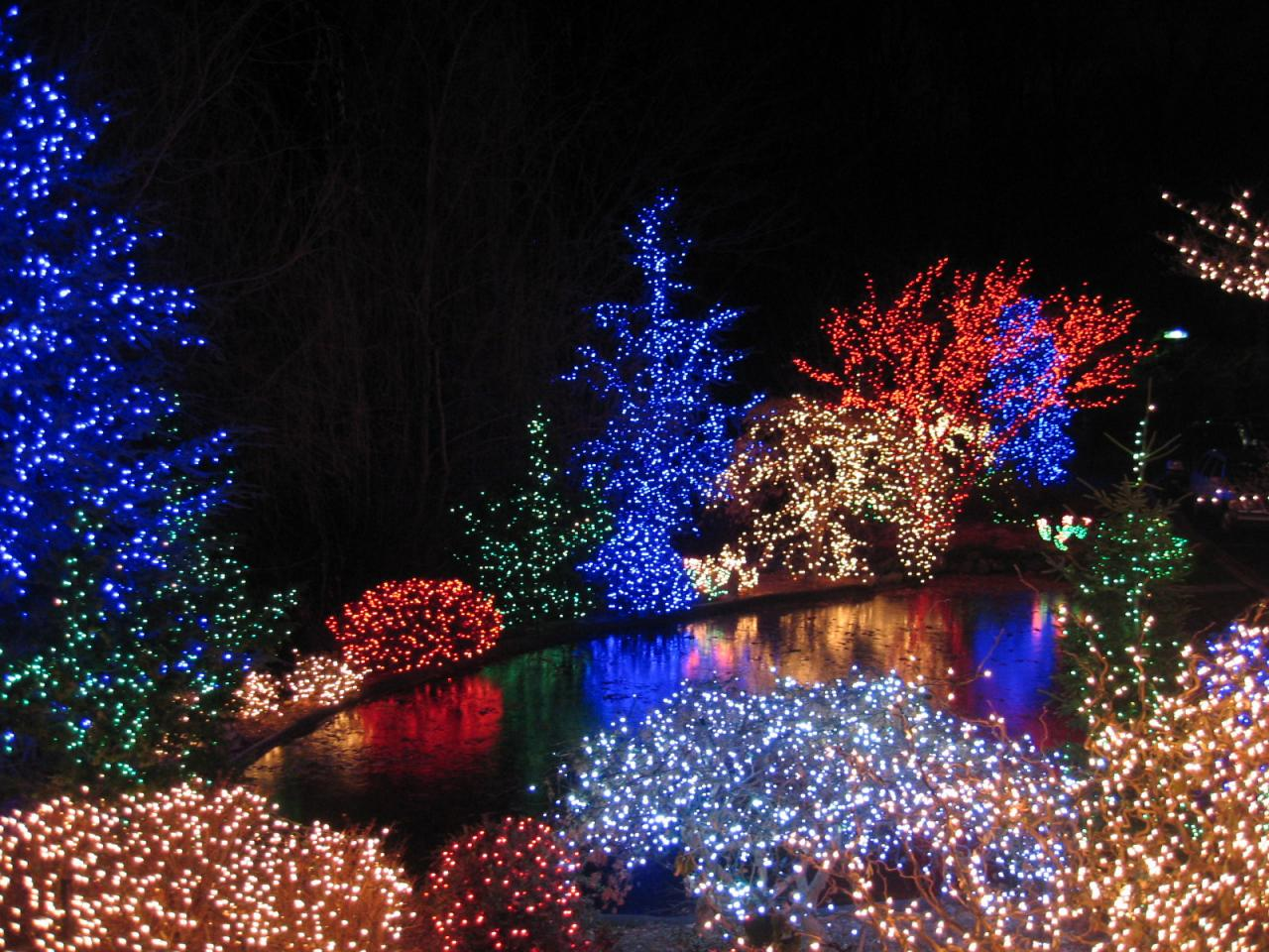 using landscape net lighting - Netted Christmas Lights
