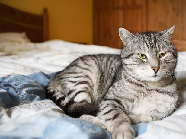 TS-94193631_Cat-on-a-Bed_s4x3