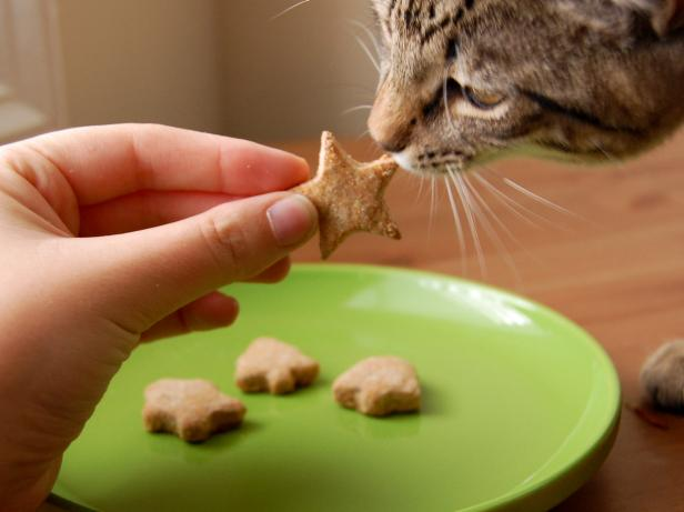 CI-AmyBites_Cat-Sniffing-Homemade-Treats_s4x3