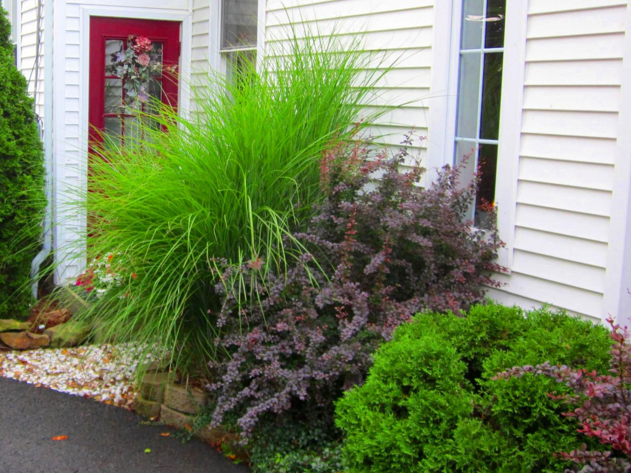 How to design a great yard with landscape plants diy for Great small trees for landscaping