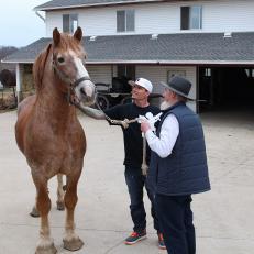 Vanilla Ice Pets Belgium Horse