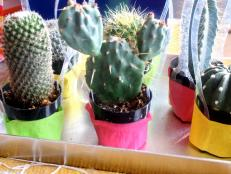 CI-Michelle-Kim_Gender-Reveal-fiesta-cactus4_h
