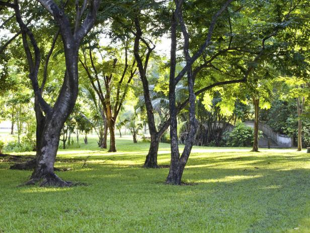 Lawn under Shade of Trees