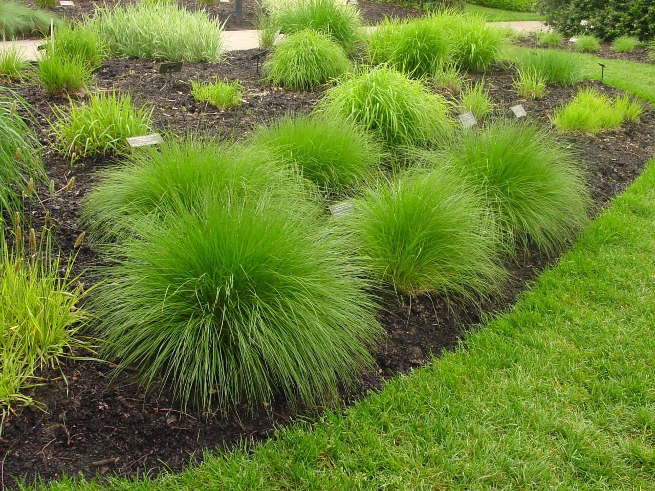 Types of ornamental grasses diy garden projects for Ornamental grass bed design