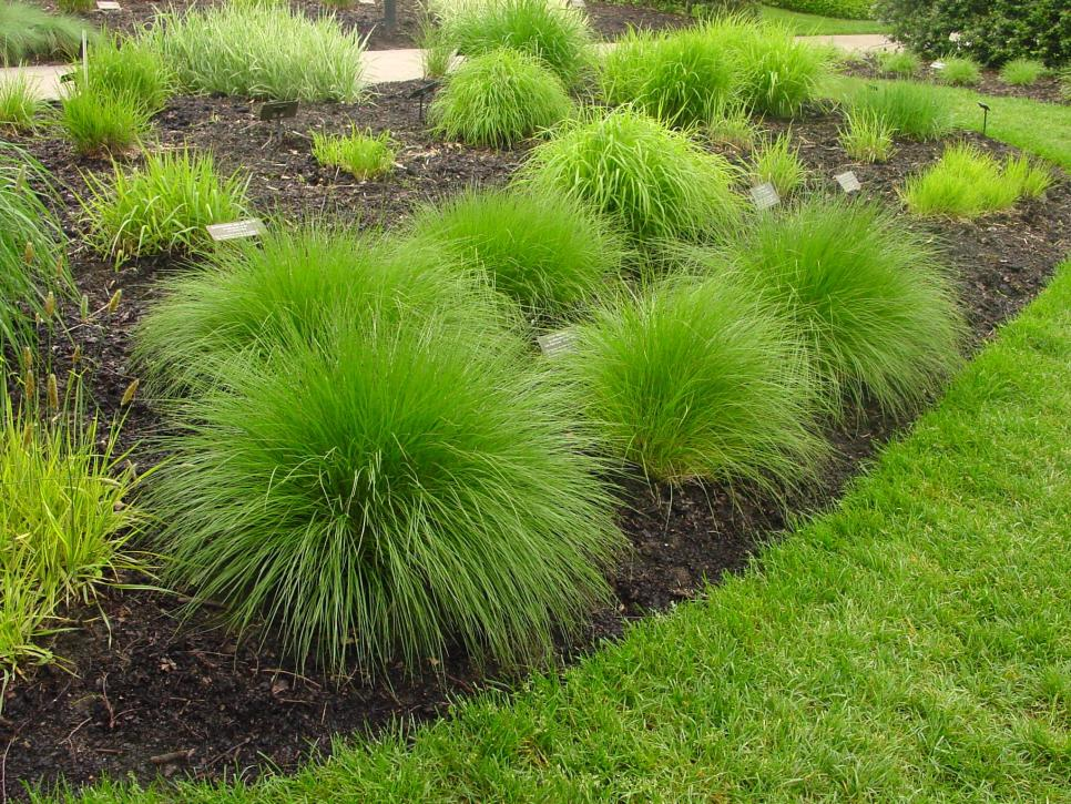 Types of ornamental grasses diy for Small landscape grasses