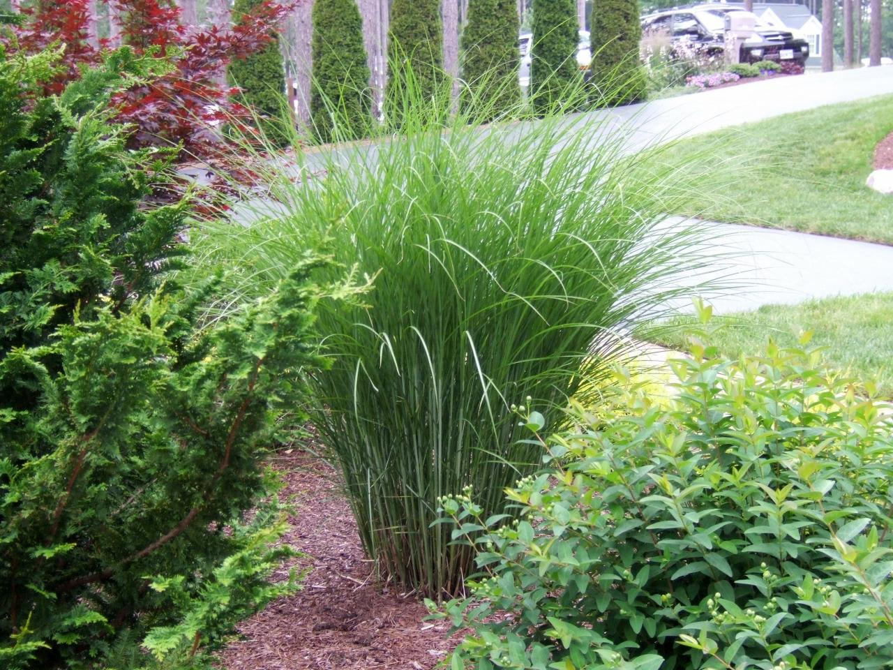 Types of ornamental grasses diy garden projects for Full sun ornamental grass