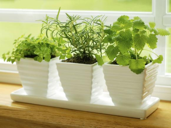 iStock-4787386_herbs-on-kitchen-windowsill