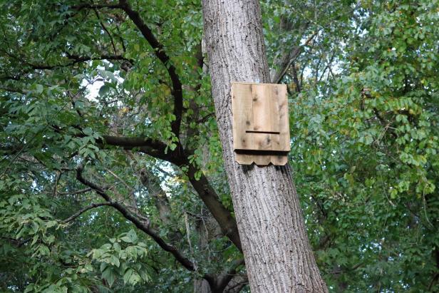How to make a cedar bat house.