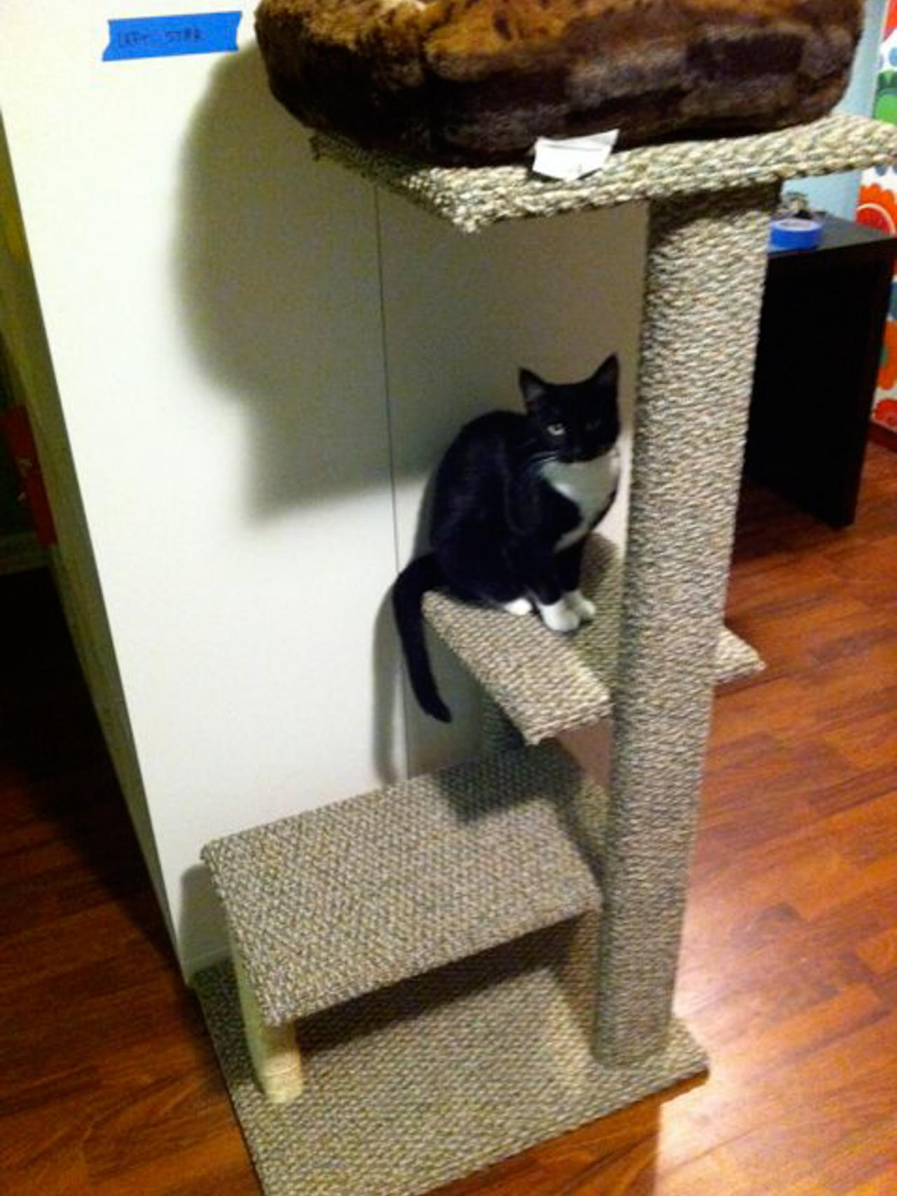 how to build a diy cat tree how tos diy