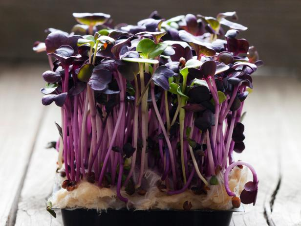 Red radish cress, sprouts on wood