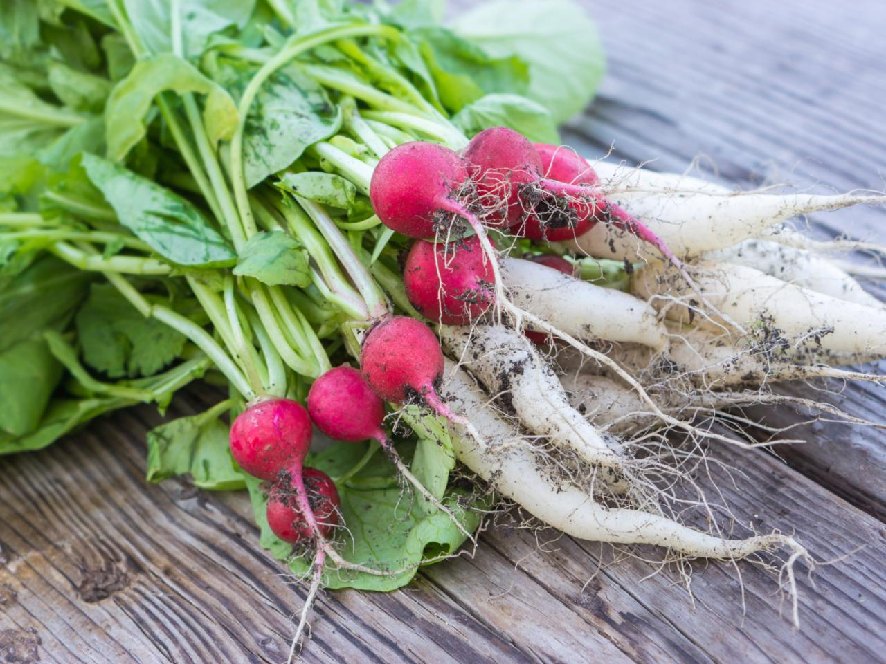 radishes cover crop diy