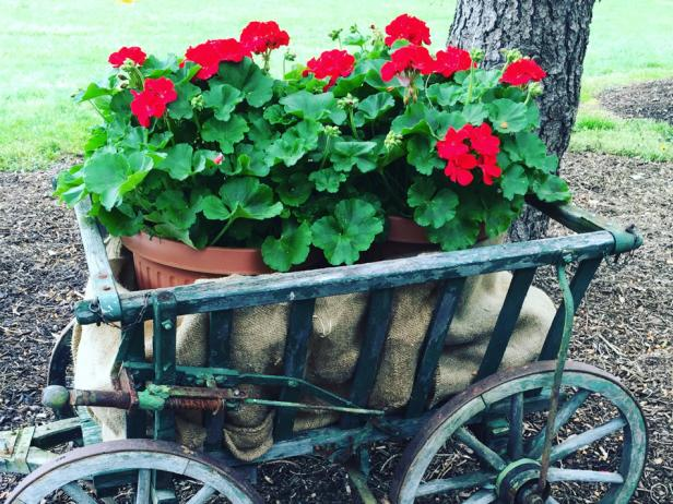 Geraniums in Vintage Wooden Cart
