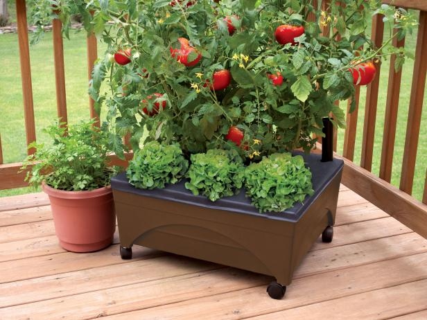 Small Space Raised Bed