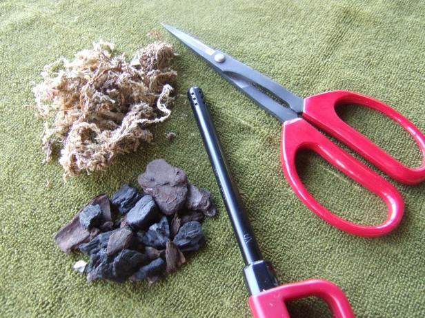 Tools For Repotting An Orchid