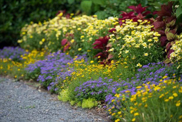 Blue And Gold Flower Border