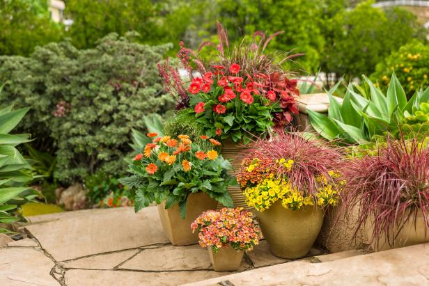 Collection Of Container Gardens