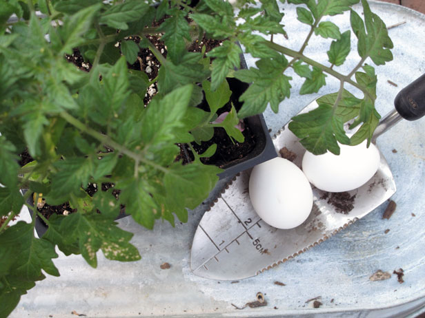 9 Tomato Planting And Growing Tips To Try Diy Network Blog Made