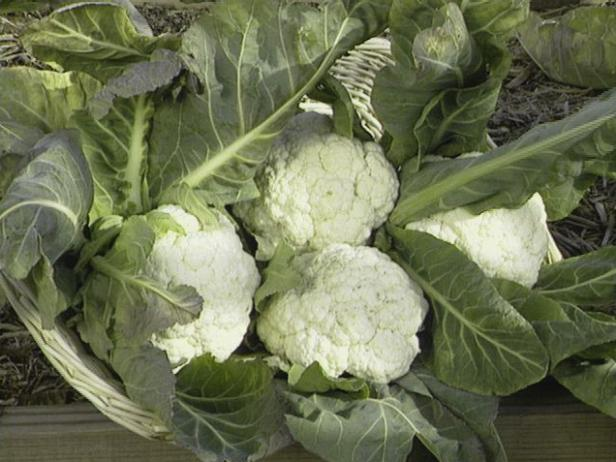 Pamper Cauliflower