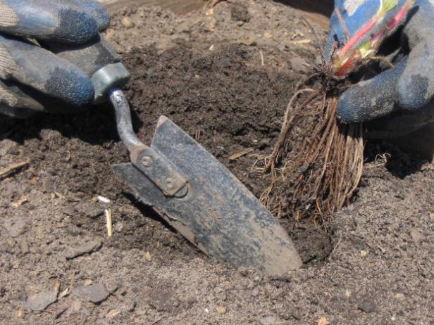 use a trowel to dig a small hole