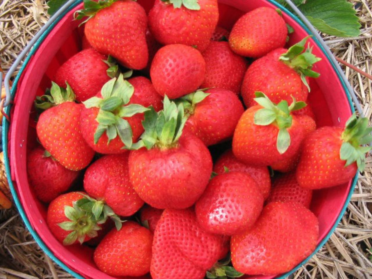 Interested in growing strawberries at home. How do you like this business idea 67