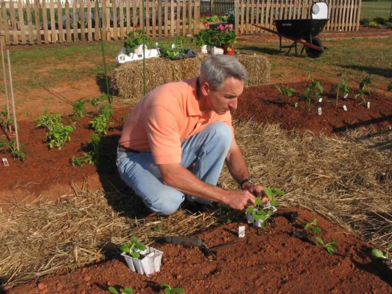 How to Start an Organic Garden | how-tos | DIY