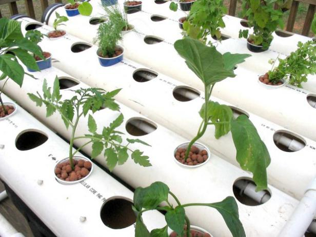 Etonnant Hydroponics Is Method Of Gardening Without Soil