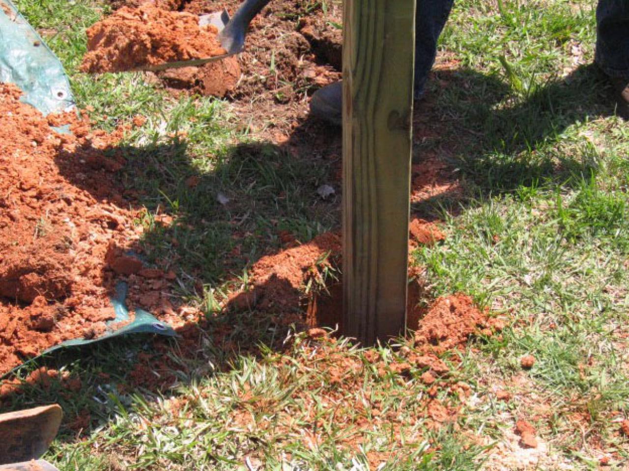 How to Plant Blackberries | how-tos | DIY