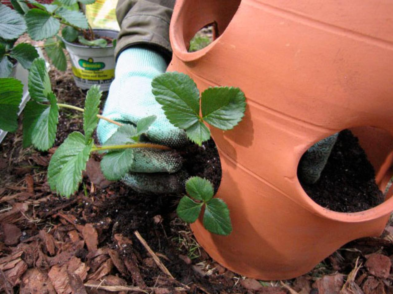 Strawberry Pot Good Choice For Small Garden E