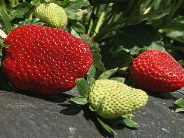 How To Plant Strawberries Tos Diy