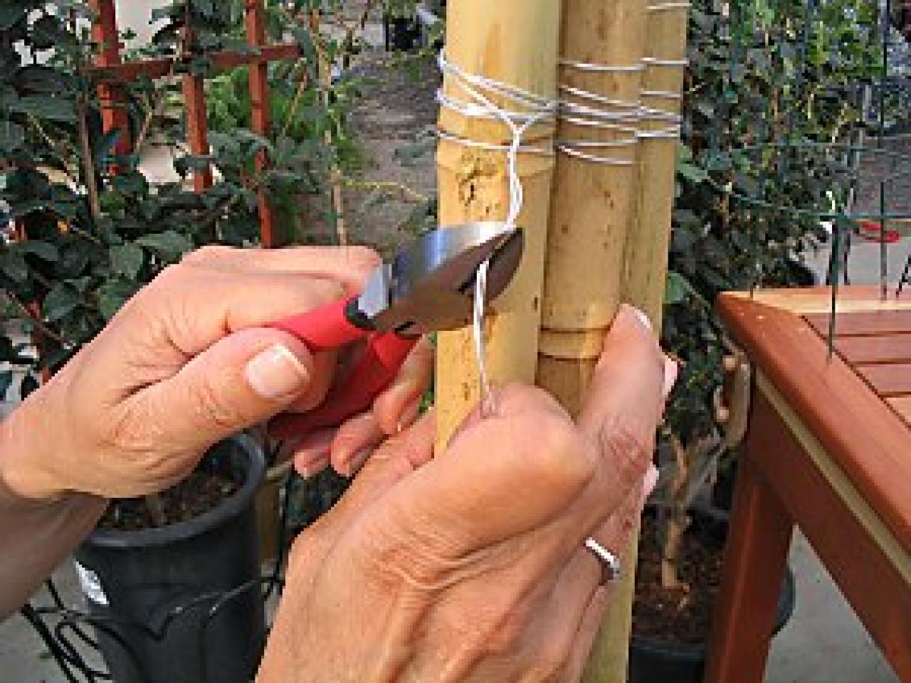 How to make a bamboo trellis how tos diy wrap the poles solutioingenieria Choice Image