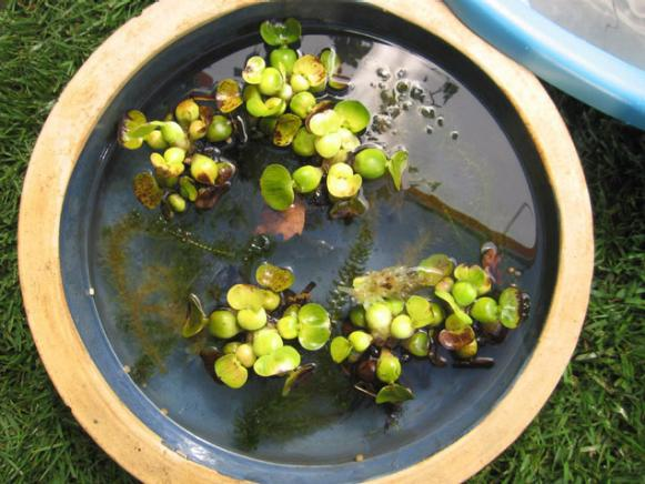 choose variety of aquatic plants for water feature