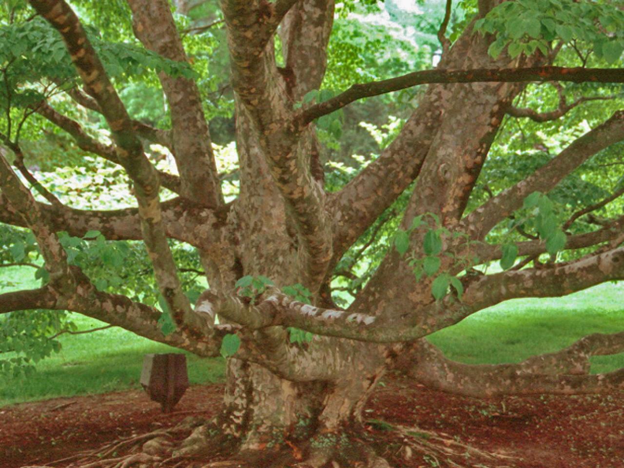 Barking Up the Right Tree | DIY