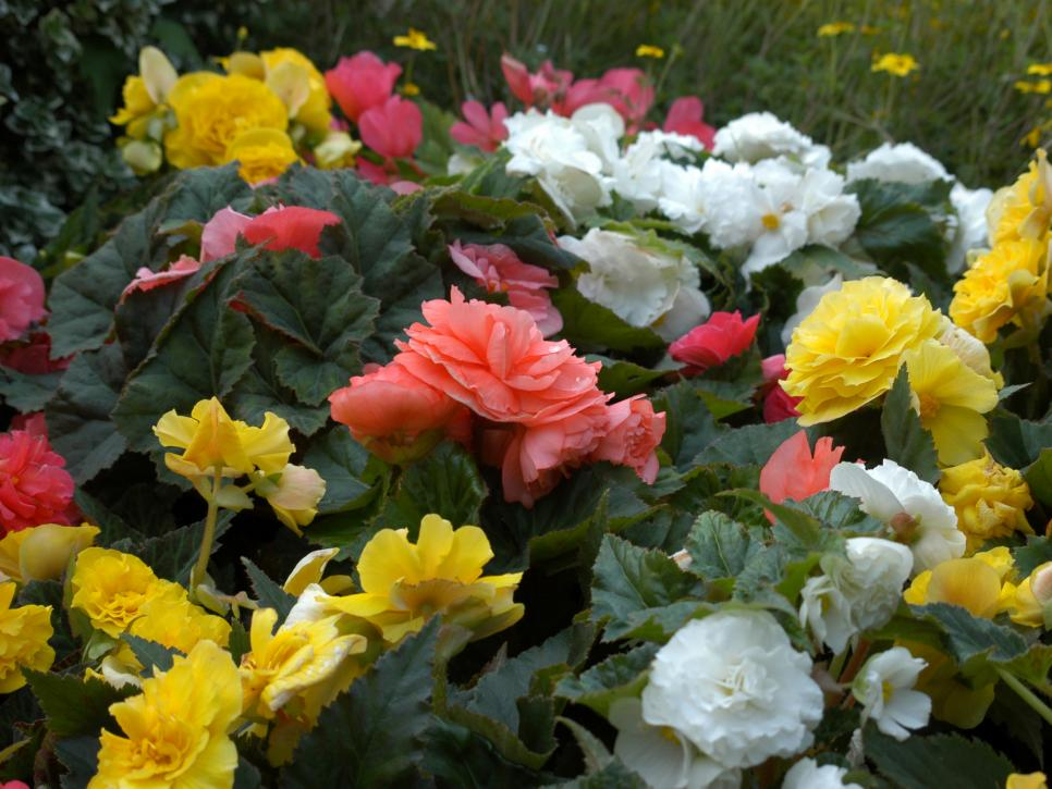 The Easiest Annuals To Plant For Color All Summer Long Diy