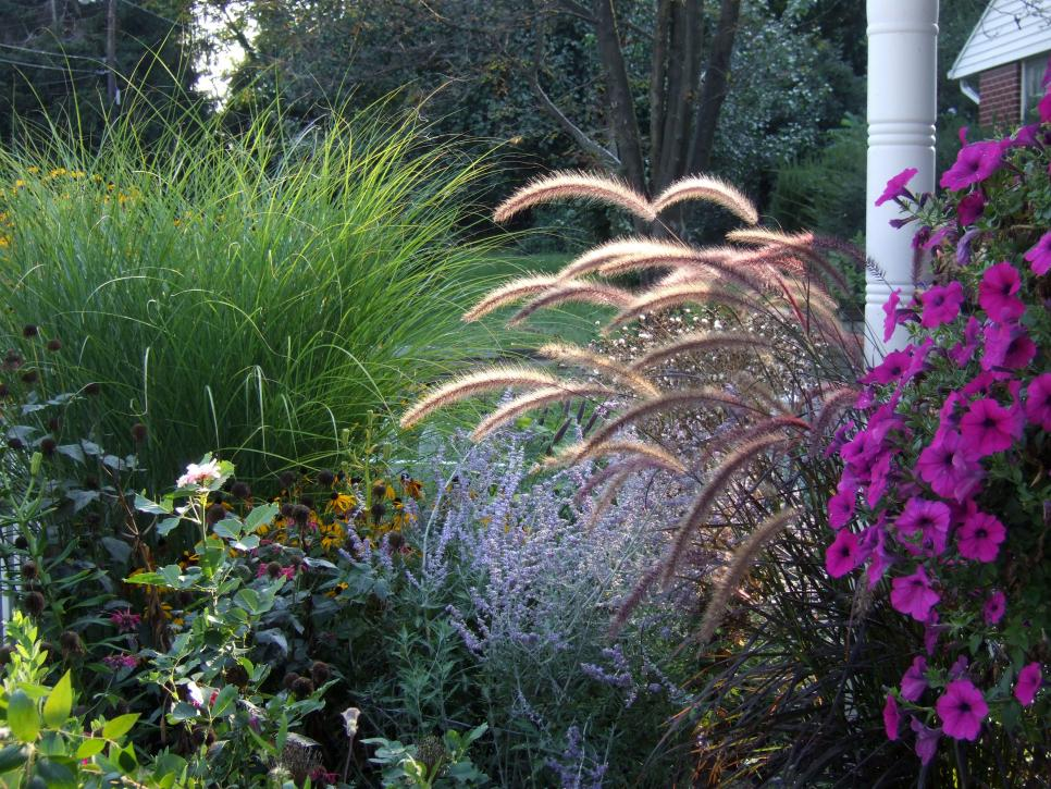 Types of ornamental grasses diy for Ornamental grass bed design